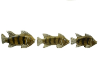 Набор рыб, балса (р-310, р-311, р-312)