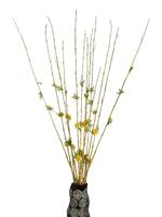 Декоративные ветки бамбука, 2 вида  (б-25)