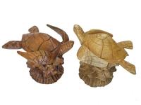 Черепаха суара на корне, 2 вида (чс-09)