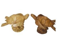 Черепаха суара на корне, 2 вида (чс-03)