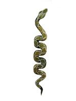 Змея ползущая тонкая (з-44)