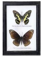 Две бабочки в рамке, 5 видов (б-21)