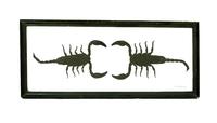 Два скорпиона в  рамке (с-34)