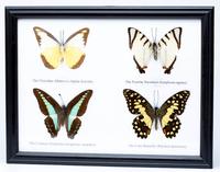Четыре бабочки в рамке, в ассортименте (б-22)