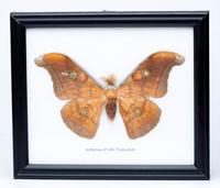 Бабочка в рамке, в ассортименте (б-18)